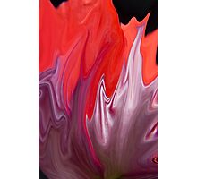 Abstract Poppy  Photographic Print