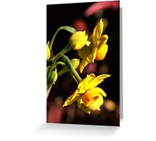 Winters Day Greeting Card