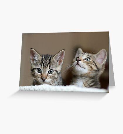 Tiny Tigers I Greeting Card