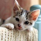 Relaxing Kitten by GreyFeatherPhot