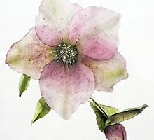 Flower in Watercolour by Roz McQuillan