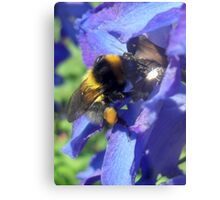 Bumblebee with pollen on delphinium Metal Print