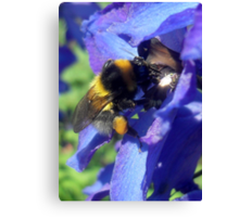 Bumblebee with pollen on delphinium Canvas Print