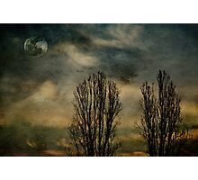 Lonely Nights Photographic Print
