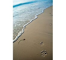Dog walks Photographic Print
