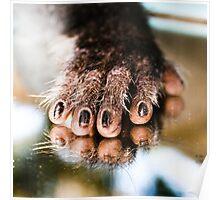 Vervet Monkey hand Poster