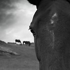 Horse (41-8) by Raymond Kerr