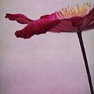 flower parasol by Iris Lehnhardt