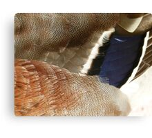 Freaky Feathers Canvas Print