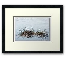 """Busy-ness"" as usual Framed Print"