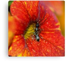 A Wanna Bee......................... Canvas Print
