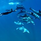 Playful dolphins by Fiona Ayerst