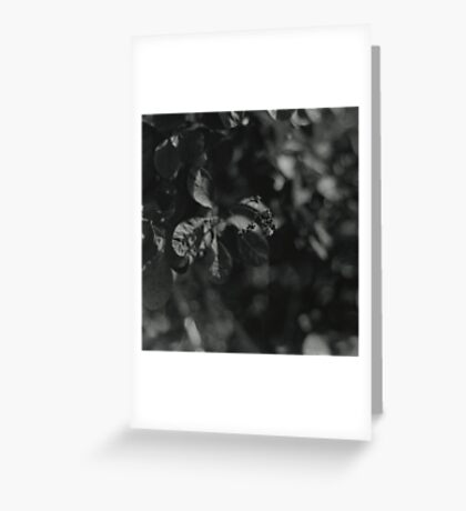 Gently Greeting Card