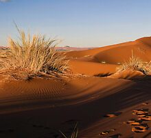 Dunes at Dawn by Scott Carr