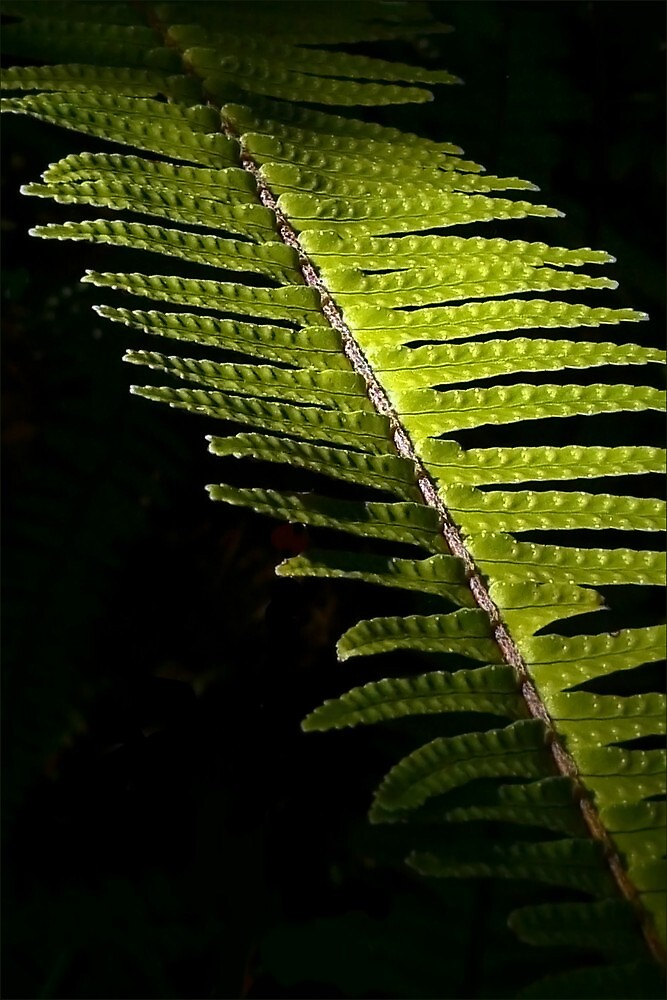 Light in the Forest:  Fern by paintingsheep