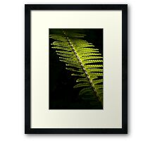 Light in the Forest:  Fern Framed Print