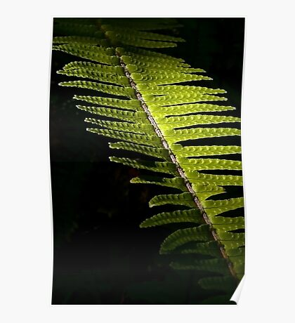 Light in the Forest:  Fern Poster