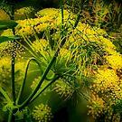 Floral Spray by Barbara  Brown