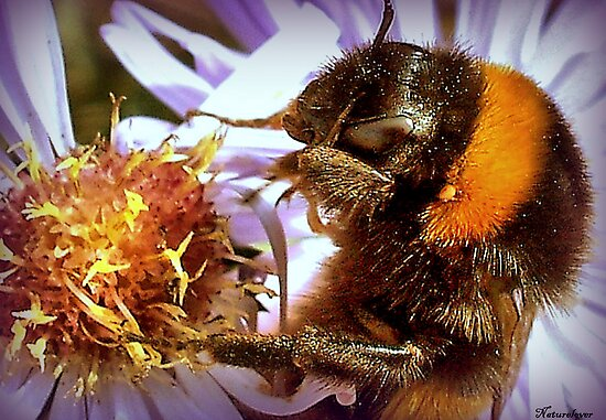 Somethings Bee-n Here Bee-fore Me! by naturelover