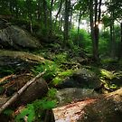 Enchanted Forest - Cunningham Falls State Park, Thurmont, MD by Matthew Kocin