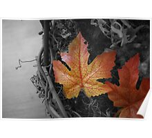 Vibrant Leaf breaking the mold Poster