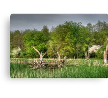 Dead Wood Swamp Before Storm Canvas Print