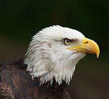 American Eagle by Simon Hills