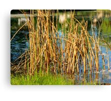 Swamp Grass and Shimmering Lake Canvas Print