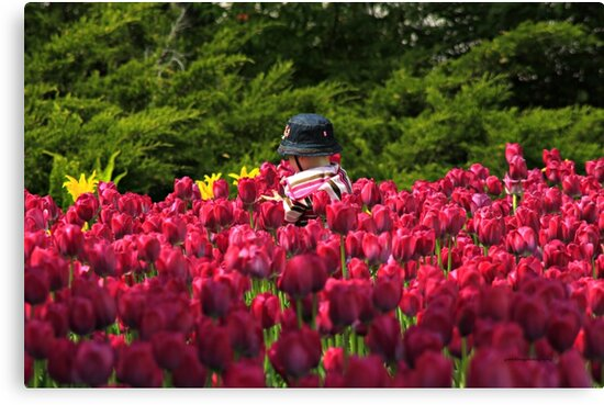Toddler in a Sea of Tulips by Yannik Hay