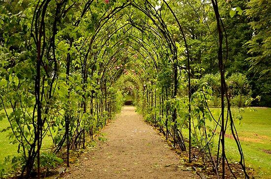 Garden Archway by Martina Fagan