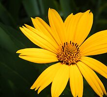 Bright Spot in Your Day by WeeZie