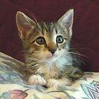 Lil' Taffy Kitten by Vivian Eagleson
