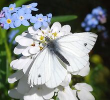 A White Butterfly by clare barton