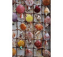 Shell art Photographic Print