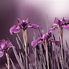 Forever Iris by jules572