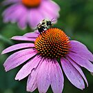 Let it bee by Ted Petrovits