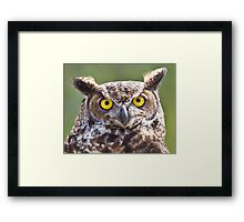 Great Horned Owl Closeup Framed Print