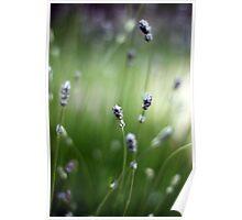 Lavender blur Poster