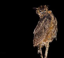 Nocturnal Hunter (Great Horned Owl) by PixlPixi