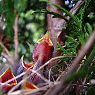 Nestlings by Karen Karl