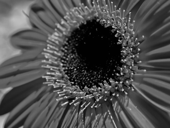 Lack of Colour by Jason Dymock Photography