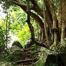 Peace Tree by Jason Dymock Photography