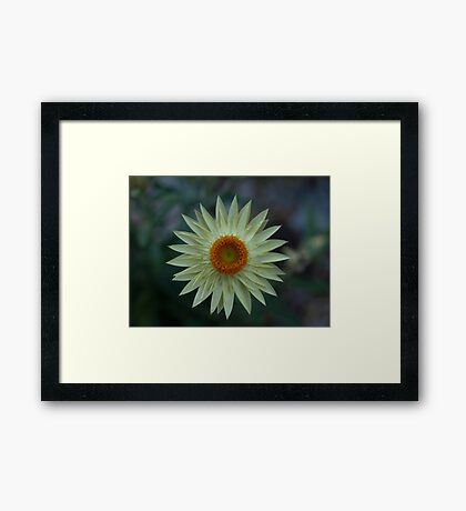 Soft Yellow Framed Print