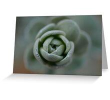 Succulent Rose Greeting Card