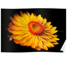A Yellow Flower Poster