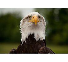 Birds of Prey Series No 11 Photographic Print