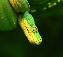 All coiled up by Adam Wignall