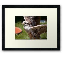 Birds of Prey Series No 12 Framed Print
