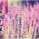 Violet... by smilyjay