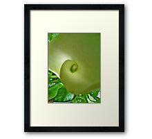 macro of Cana Lily Framed Print